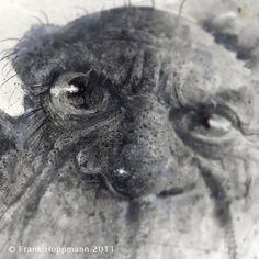 Frank Hoppmann Picasso on Behance
