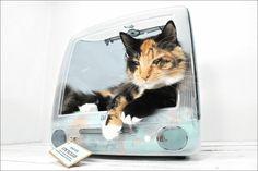 旧型iMacの画面から猫が出てくるという仕様の猫用ベッド「Think different」 - GIGAZINE