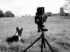 Will Gudgeon Photography: First roll of film through my Mamiya RB67