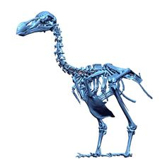 http://io9.com/scientists-resurrect-the-dodo-with-3d-laser-scanning-1655899642