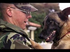 Dogs Welcoming Soldiers Home Compilation 2012 - YouTube