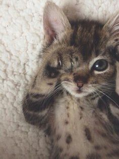 Awh #meow #how sweet, #awh - animals