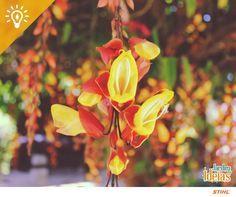 Que tal deixar o pergolado do seu jardim mais florido? Escolha trepadeiras como alamanda amarela e sapatinho de judia.