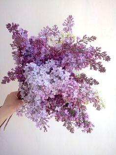 Lilac <3