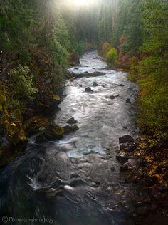 Rogue River, Forest Photography, Autumn Day, Rogues, Great Places, Oregon, Country, Water, Outdoor