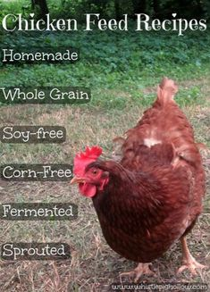 DIY Chicken Feed: