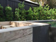 Contemporary tiny plunge pool by Babylon Gardens NZ  www.babylongardens.co.nz