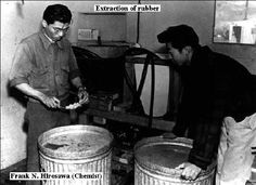 """Frank Hirosawa and assistant - manzanar guayule rubber extraction, collecting guayule rubber """"worms""""."""