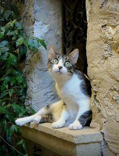 Le chat ~ Saint-Paul de Vence  ~ France