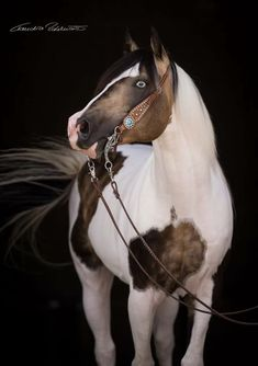 unidentified flying paint — World of Equines All The Pretty Horses, Beautiful Horses, Animals Beautiful, Beautiful Horse Pictures, Horse Girl, Horse Love, Caballo Tobiano, Zebras, Animals And Pets