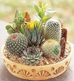 Cactus Dish Garden - miniature desert landscape of assorted cacti and succulents.