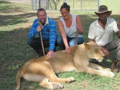 Walking with lions experience