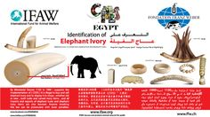 Combating wildlife trafficking in Egypt | IFAW.org