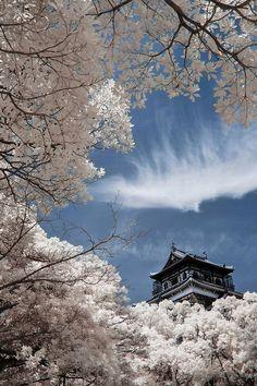 Hiroshima Castle, Cherry blossoms in full bloom, Japan