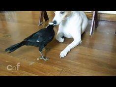 Un pájaro dándole de comer al gato y al perro: http://ramrock.wordpress.com/2014/07/30/gatos-perros-animalitos-bichos-la-leche-son-la-leche/