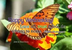 Happy Wednesday Love All good morning wednesday hump day wednesday quotes good…