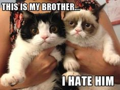 Grumpy Cat's Brother