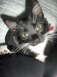 Hello there :) Cats, Animals, Gatos, Animales, Animaux, Animal, Animais, Kitty, Cat