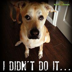 #FunnyDog #Bark4Green #LOL #GuiltyDog