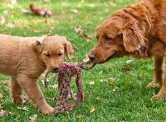 4 reasons why young puppies still need their mothers.
