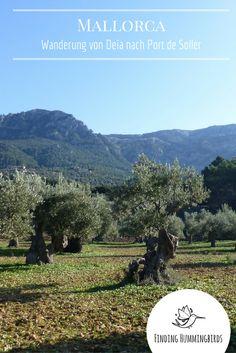 Mallorca: wunderschöne Wanderung von Deia nach Port de Soller