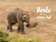 Elefant - Heute ist ein schöner Tag! Sweet Quotes, Woodland Party, Holiday Cocktails, Its A Wonderful Life, Osho, Emoticon, Happy Day, Cute Animals, Humor