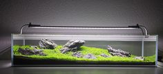 /aquascaping-