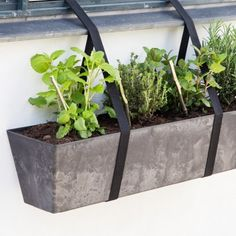 Window boxes growing herbs, hanging different places - for the Gin section