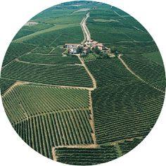 MICHELE CHIARLO - Vini Classici del Piemonte: Barolo, Barbaresco, Barbera, Gavi, Monferrato, Moscato