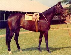 Kelso (1957-1983) He was Horse of the Year 5 times, and won almost 2 million dollars.