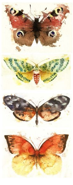 KO.33 butterflies  moths 3 - Kate Osborne