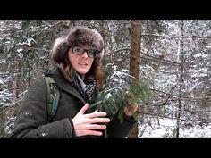 Survival Trees - Birch, Spruce, Oak - YouTube