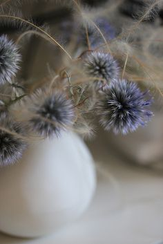 Grey-blue flowers in vase,  Echinops ritro,  small globe thistle. (#MissKL and #SpringtimeinParis)