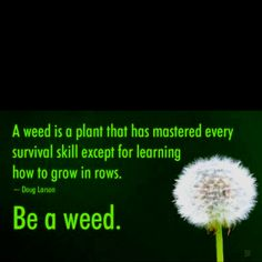 Be a weed ... Be random Step outside of the box.
