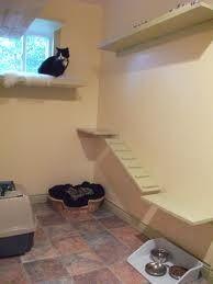 Cat hotel