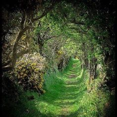 Magical forest.....out of a fairy tale...
