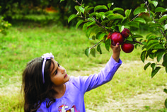 Apple Picking Farms in New Jersey