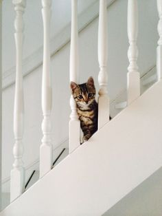 kitten + stairs | animals + pet photography #cats