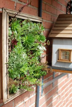 vertical garden #succulents #sempervivum  No Linde - Incremental Mini-Gardens http://nolinde.com