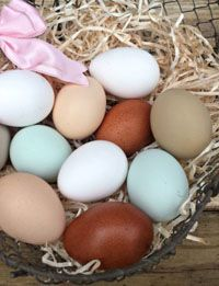 A/ Guide to Different Colored Chicken Eggs