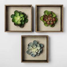 "Set Of 3 8"" Succulent Shadowbox Decorative Wall Sculpture - Threshold™ : Target"