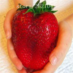 1000 PCS Big Giant Strawberry Seeds, Rare Sweet Four-season vegetable and fruit Seeds, Garden plants