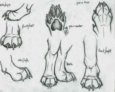 Wolf Drawing Tips Animal Sketches, Animal Drawings, Drawing Sketches, Art Drawings, Drawing Animals, Drawing Tips, Wolf Drawings, Drawing Art, Drawing Ideas
