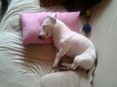 Jack loves my La marelle pillow, too :-)
