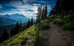 Preview wallpaper mountains, snow-capped peaks, forest, grass, trees, paths, tracks