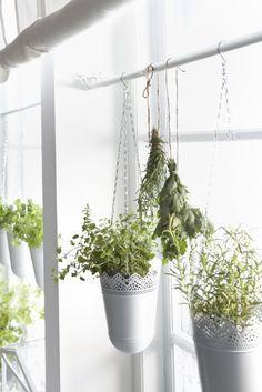 hanging ikea planters. Kitchen herbs, to hang right of garage door?
