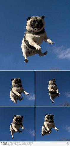 El perro volador de Camila #ConcursoBellmurJeans #Camila