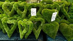 moss hearts ~ wish i could find these!