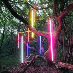 NEON TUBES Where the fairies gather in the forest?
