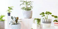 3 dicas básicas para cultivar plantas dentro de casa